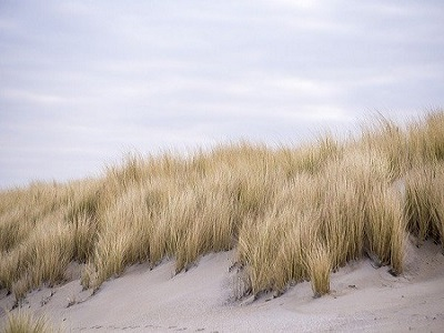 Duinen Den Haag